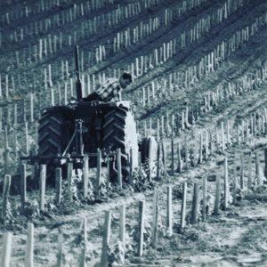 remy-verdier-travail-des-vignes-au-chateau-bessan-a-tabanac